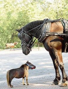 thumbelina_smallest_horse
